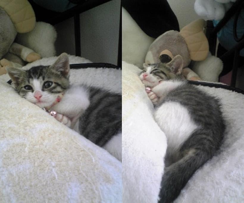 皮膚真菌症の症状が回復していく子猫期の愛猫ミミ