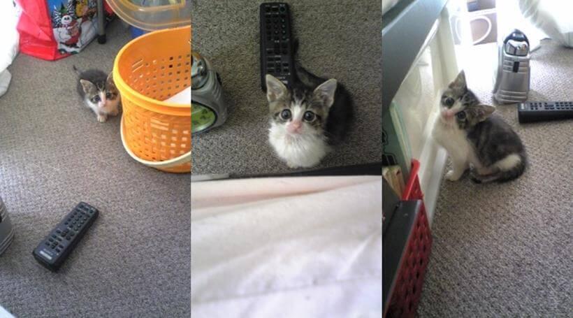 寝室で隔離生活を送る子猫期の愛猫ミミ