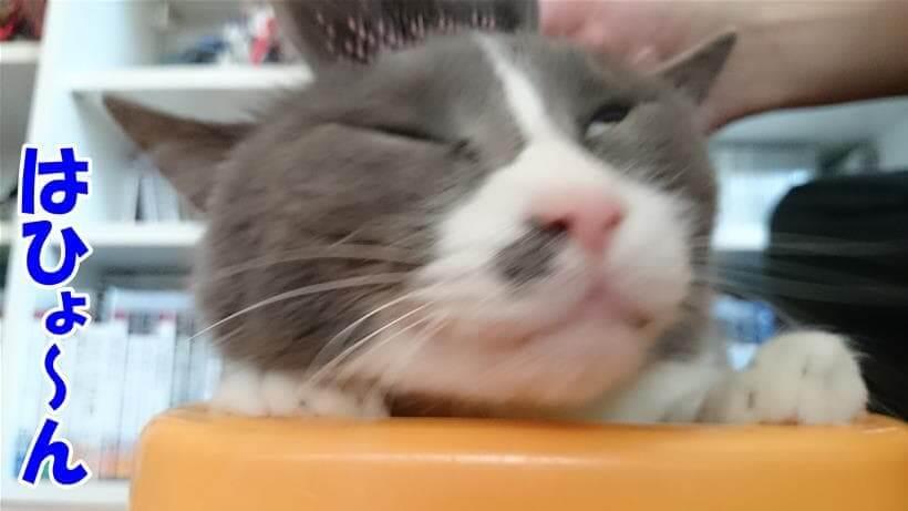 ブラッシングしてもらって気持ちよい表情の愛猫モコ