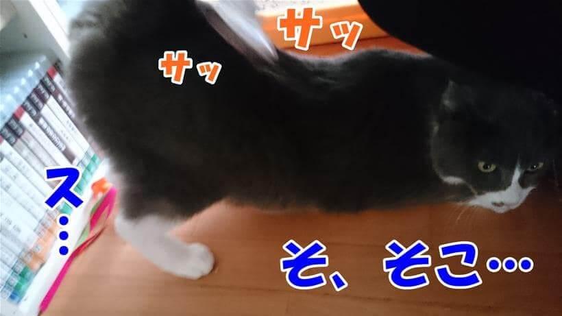背中からお尻にかけてブラッシングされている愛猫モコ