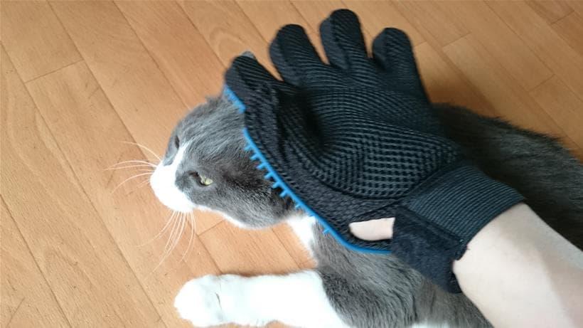 グローブ型ブラシで頭をブラッシングされる愛猫モコ
