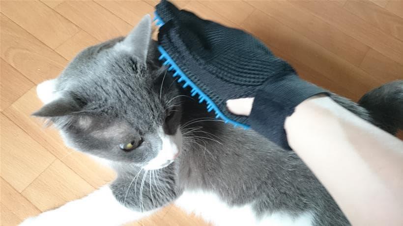 グローブ・ハンド型ブラシでブラッシングする愛猫モコ