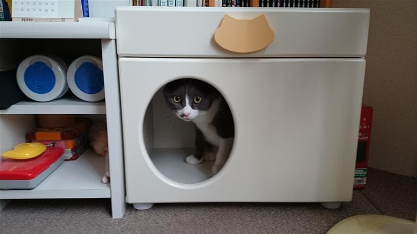 ペットハウス「オアシス」に入る愛猫モコ
