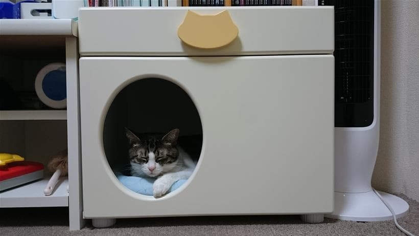 ペットハウス「オアシス」に入る愛猫ミミ