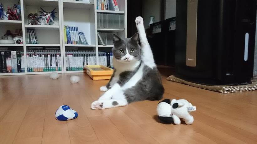 足を開いて毛繕いしている愛猫モコ