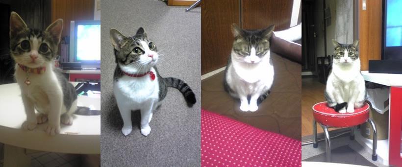 子猫から成猫までミミの成長比較