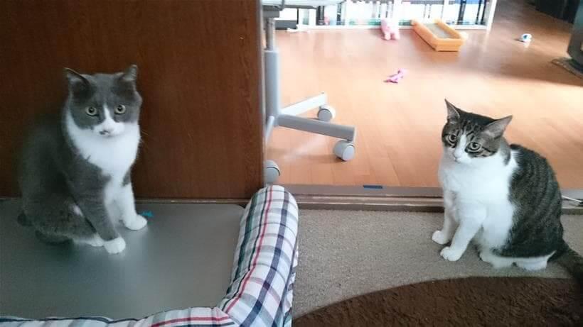飼い主を見る愛猫たち