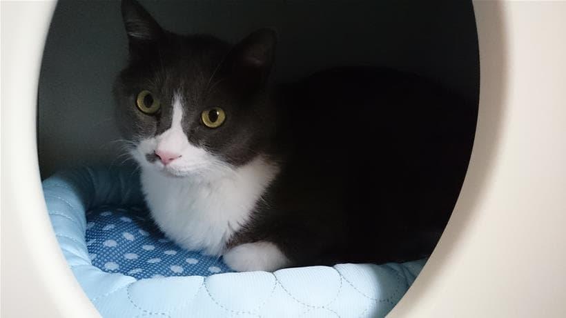 ペットハウス「オアシス」と愛猫モコ