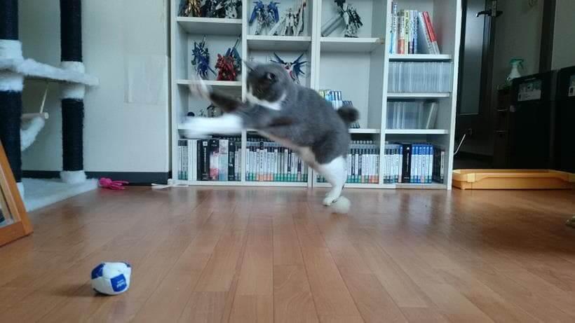 自分の抜け毛を丸めた毛玉のボールで遊ぶ愛猫モコ③