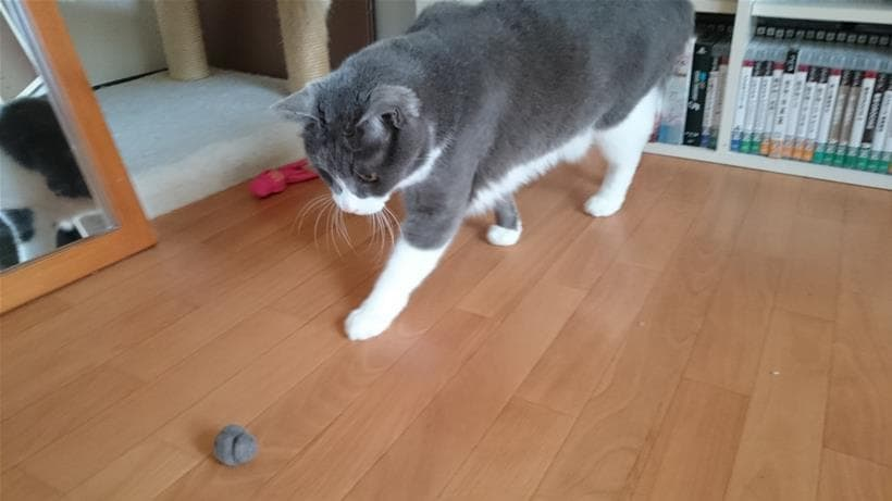 自分の抜け毛を丸めた毛玉のボールで遊ぶ愛猫モコ①