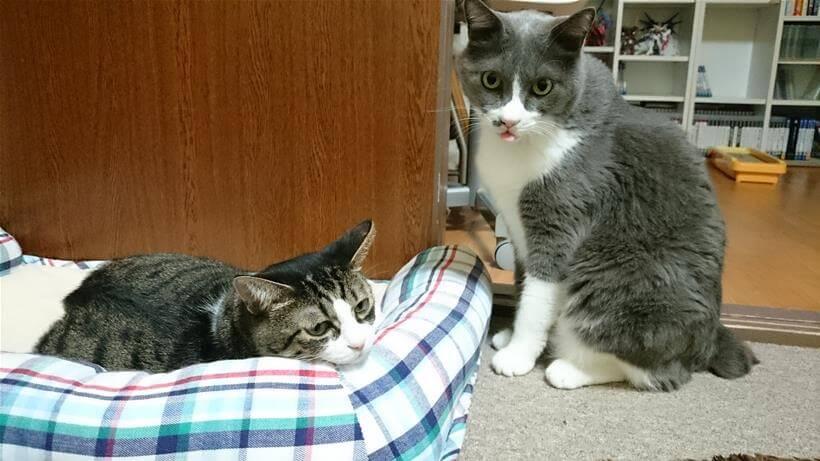 ひんやりプレート用ベッドでくつろぐ愛猫ミミ