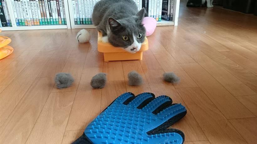 愛猫モコの前に並べられたブラッシングの成果(毛玉)
