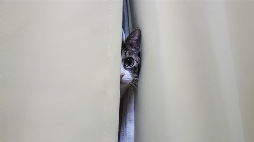 愛猫モコのてんかん発作を目の当たりにして驚く愛猫ミミ