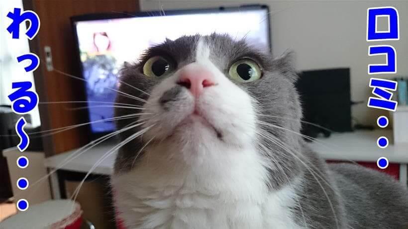 よくない口コミが多めで困惑する愛猫モコ