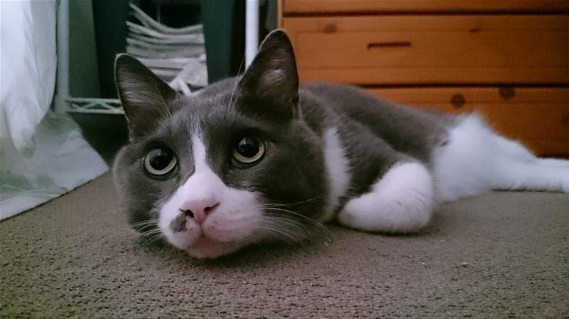 てんかん発作を起こして凹んでいる愛猫モコ