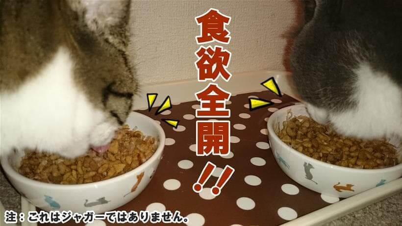食欲全開でキャットフードを食べる愛猫たち
