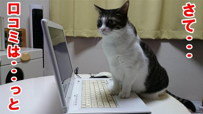 PCでクプレラの口コミを調べようとしている体の愛猫ミミ