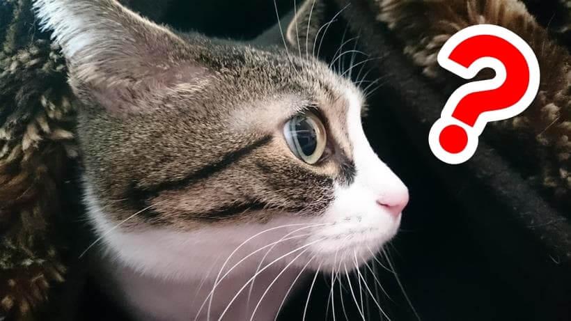 てんかんって何?って顔をしている体の愛猫ミミ