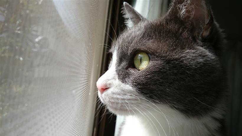 窓際で外を眺めるてんかん持ちの愛猫モコ