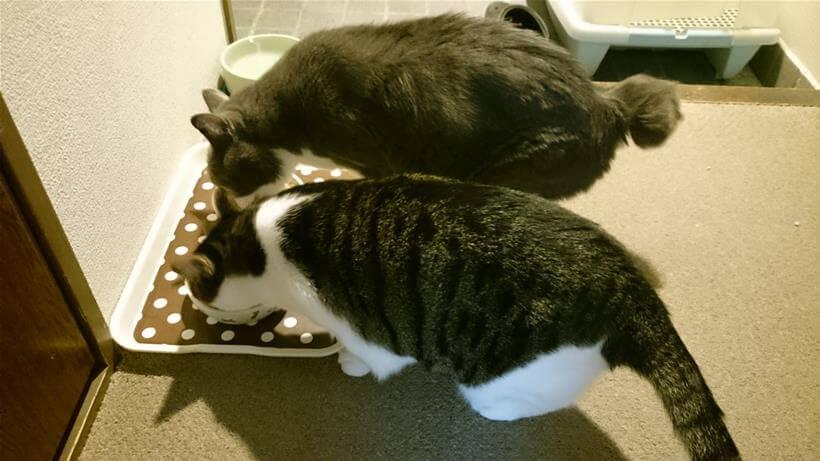 愛猫モコのてんかん発作から2日経って落ち着きを取り戻す愛猫たち