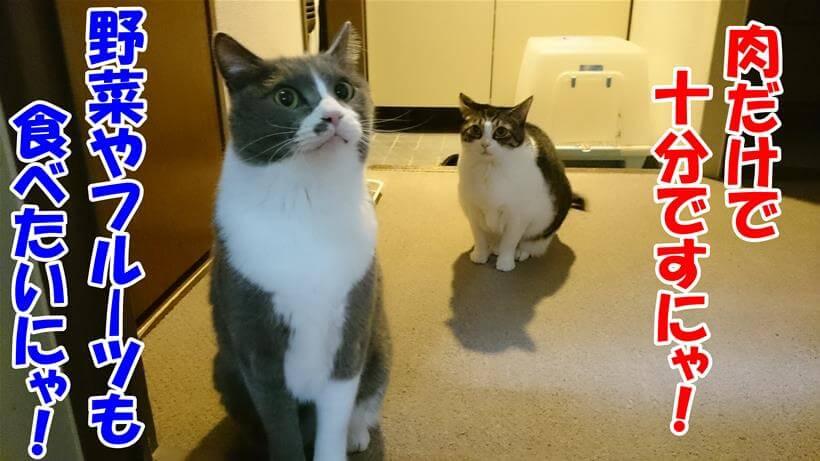 ご飯待ちしている愛猫モコとミミ