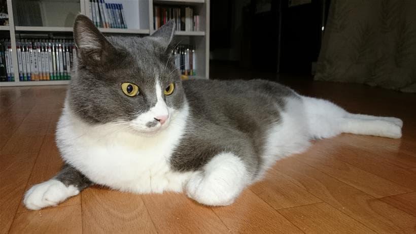 床に横になっているてんかん持ちの愛猫モコ