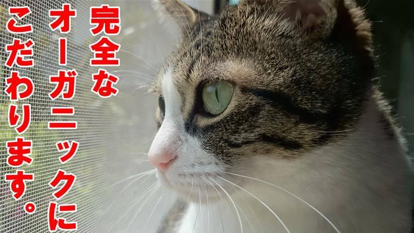 オーガニックに拘るという意識高い系猫を演じている体の愛猫ミミ