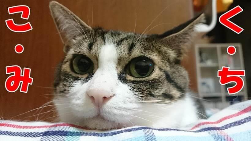 アーテミス オソピュアグレインフリーの口コミ案内している体の愛猫ミミ