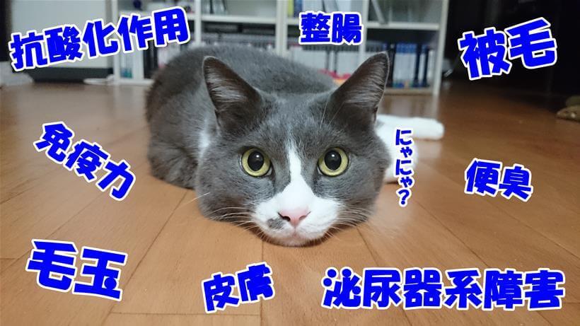 多角的に猫の事を考慮しているホリスティックレセピーに混乱する愛猫モコ