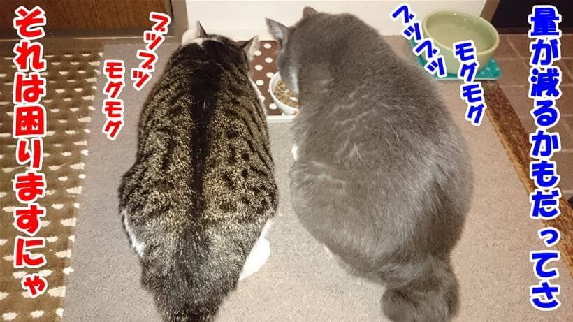 ブツブツと呟いている体でキャットフードを食べる愛猫たち