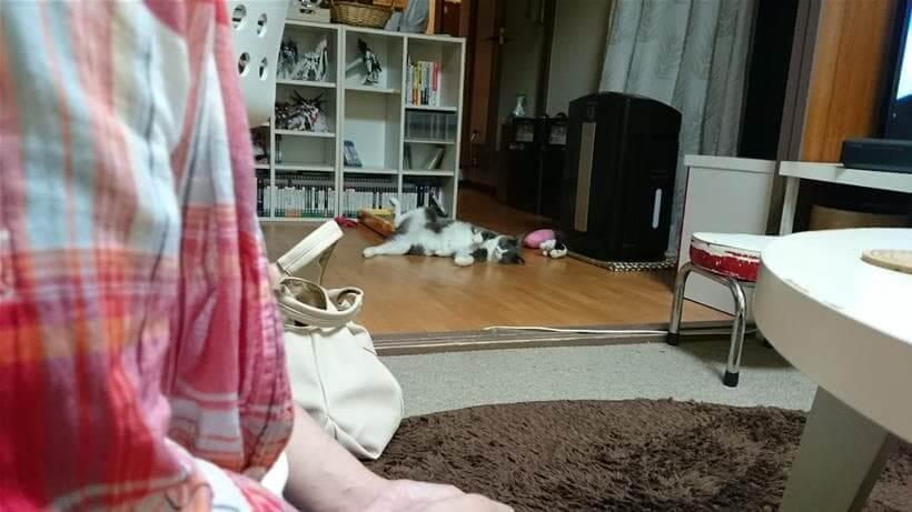 警戒しているにも関わらず彼女を前にへそ天している愛猫モコ
