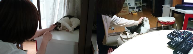 早々に彼女に懐く愛猫ミミ