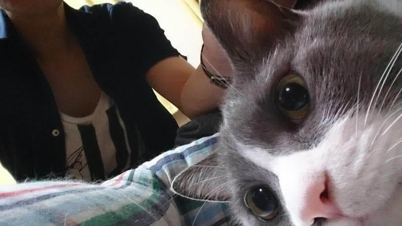 飼い主である僕と愛猫モコ