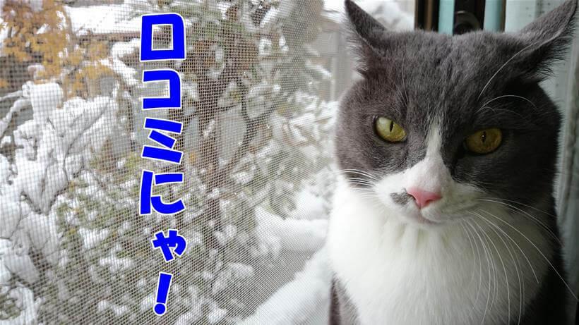 積もった雪を背景に口コミだと言っている体の愛猫モコ