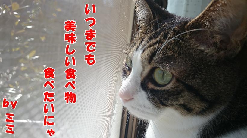 食べ物に関する俳句を詠んでいる体の愛猫ミミ