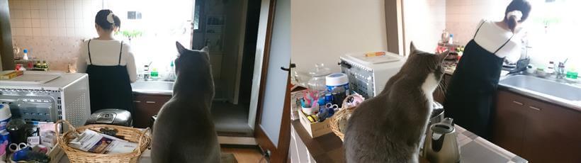 料理をしている彼女をひたすら監視している愛猫モコ