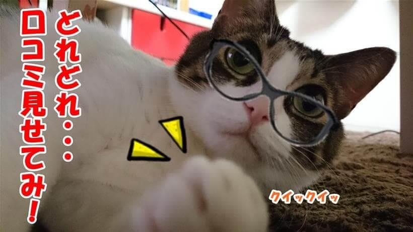 モグニャンの口コミを確認しようとしている体の愛猫ミミ
