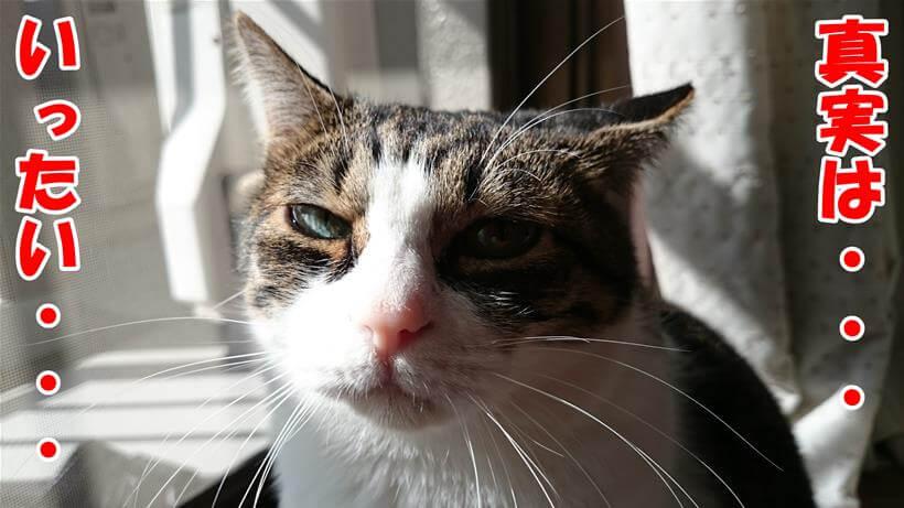 口コミにて真実を探ろうとしている体の愛猫ミミ