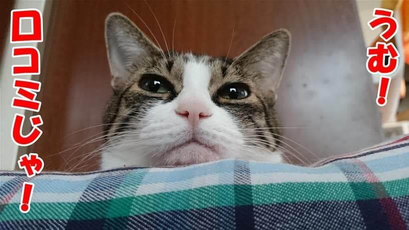 口コミを案内する体の愛猫ミミ