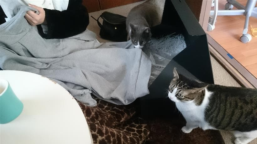 警戒心と好奇心が入り乱れる愛猫モコとミミ