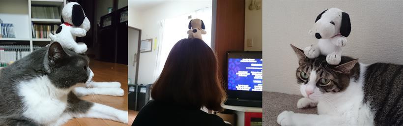 それぞれ頭の上にスヌーピーを乗せる彼女と愛猫モコとミミ