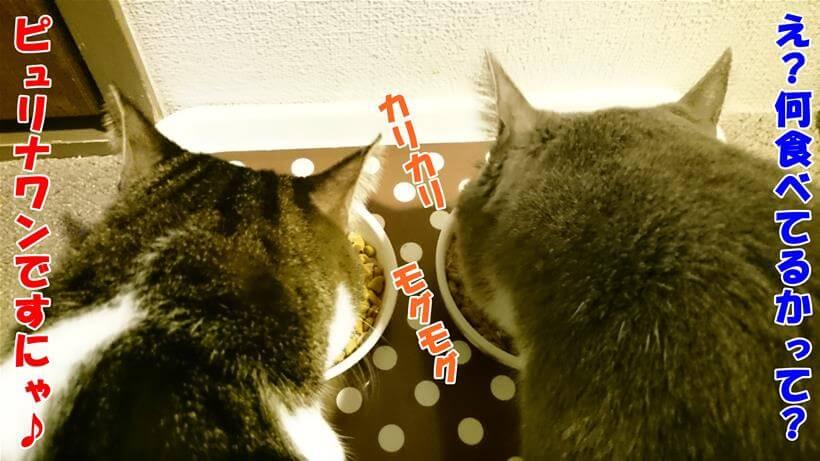 ピュリナワンを食べている愛猫モコとミミ