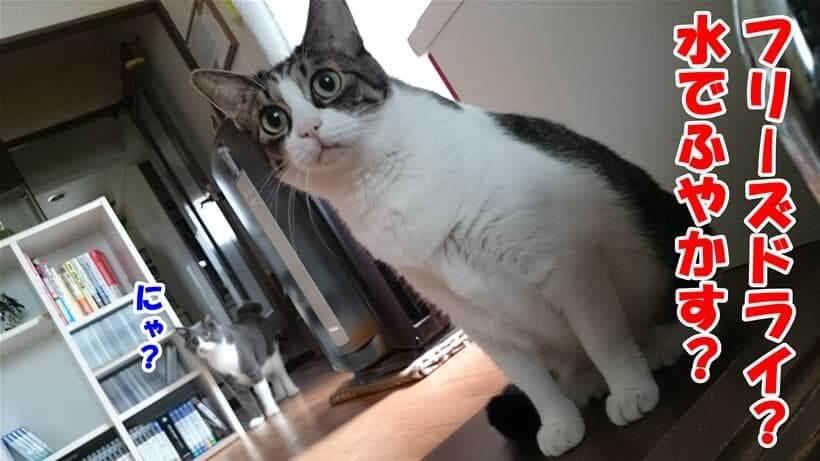 水でふやかすフリーズドライタイプが何か知らない体の愛猫たち