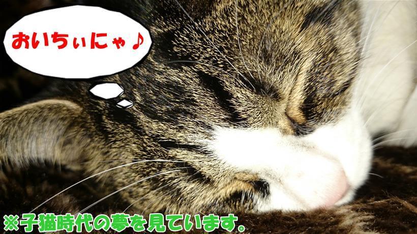 子猫時代の夢を見ている体の愛猫ミミ
