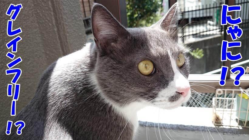 グレインフリーに驚く体の愛猫モコ