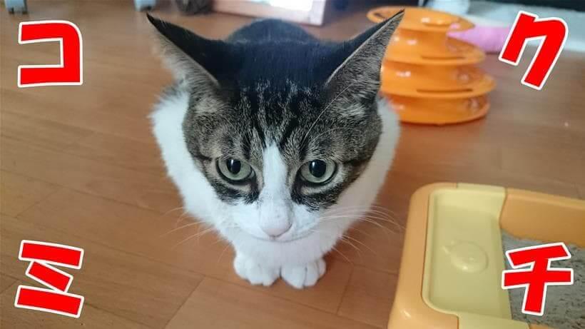 アディクション サーモンブルーの口コミを案内する体の愛猫ミミ