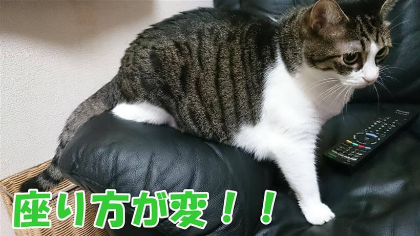 猫の座り方/ミミ