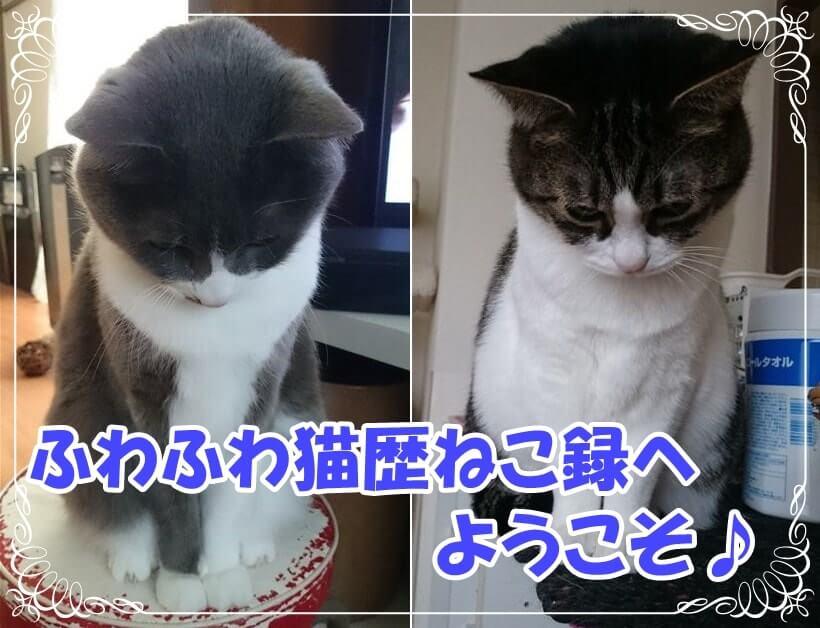 「ふわふわ猫歴ねこ録」ホームタイトル画像(お辞儀する愛猫たち)