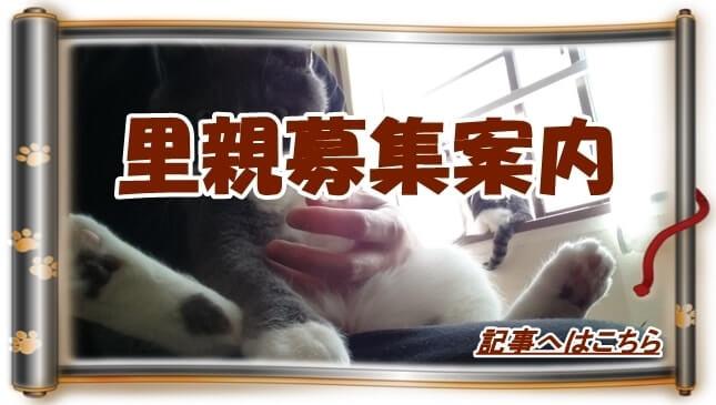 里親募集サイト案内へ(愛猫モコを抱っこする飼い主巻物Ver.)