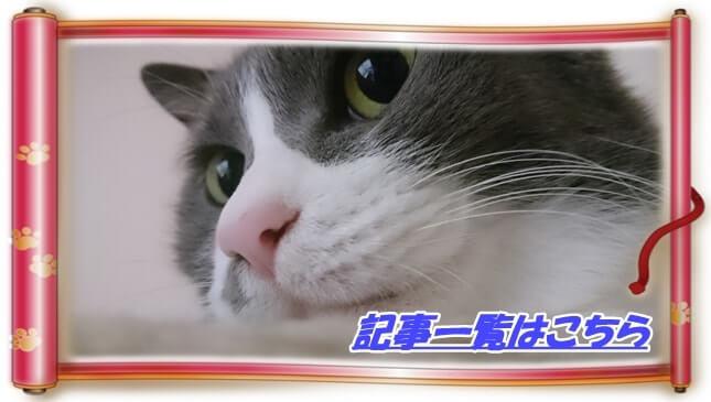 猫の保険・病気・怪我記事一覧へ(愛猫モコの顔アップ巻物バージョン)